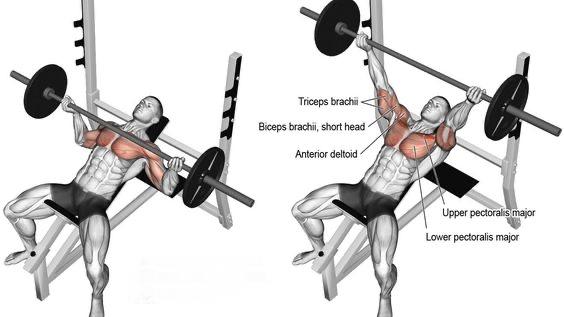 incline chest press.jpg